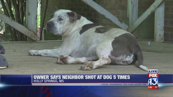 Woman claims neighbor shot her three dogs multiple times, hit one with machete