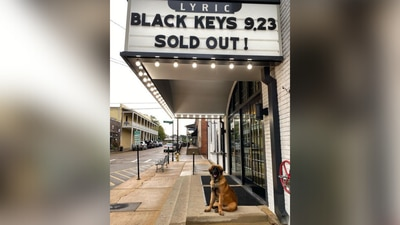 Covid sniffing dogs being used at Mid-South concert venue