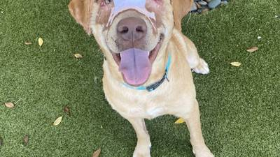 Buddy the dog headed to foster home in Starkville, humane society says