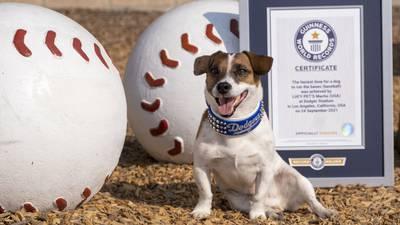 Photos: Russell terrier Macho declared fastest dog baserunner at Dodger Stadium