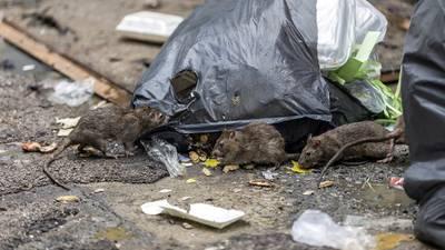 Rat infestation of Arizona neighborhood linked to hoarder house owner's death