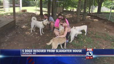 Five dogs rescued from a South Korean meat-packing factory find refuge in North Mississippi