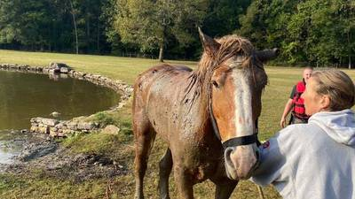 SCFD rescues horse stranded in muddy pond