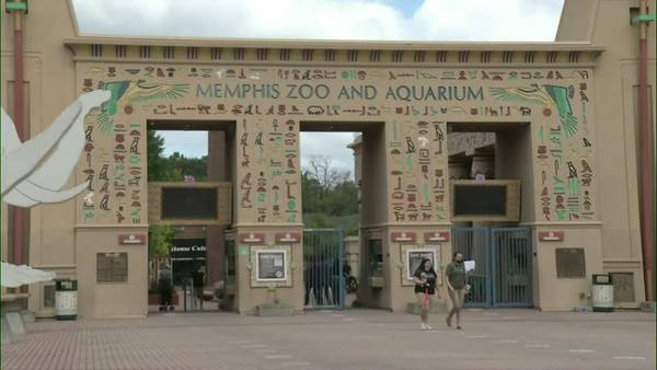 MPD searching for man who carjacked woman at Memphis Zoo