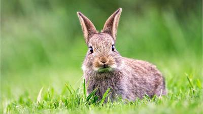Florida woman rescue rabbit with dart in face