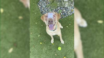 WATCH: Buddy the dog headed to foster home in Starkville, humane society says