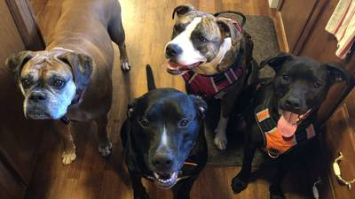 Photos: FOX13 Viewers shared photos of their best friends on National Dog Day