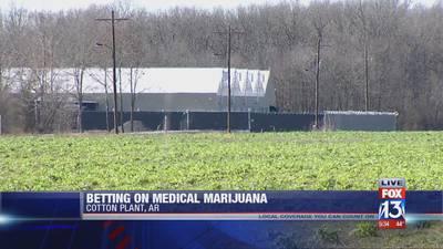 An inside look at Arkansas' first medical marijuana cultivation facility